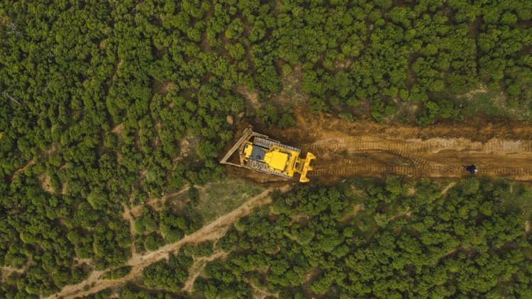 Deforesting in the Mountains